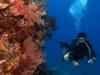 Mohamed Abdelsalam - PADI Divemaster, Oceans Divers